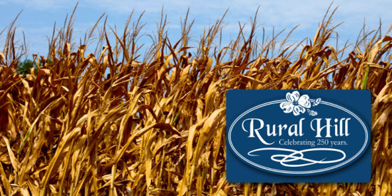 featured_ruralhillcornmaze1