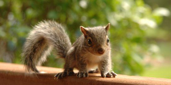 animal-blurred-background-brown-939478
